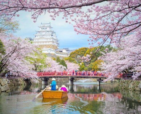 japonska potovanje češnje na japonskem