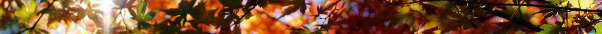Barve jesenskega listja na Japonskem