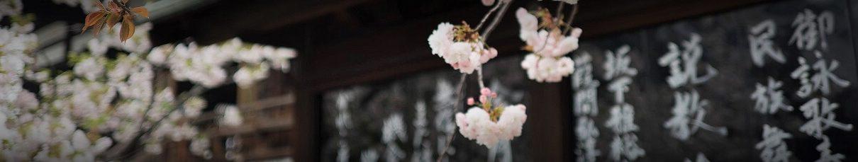 češnje japonska