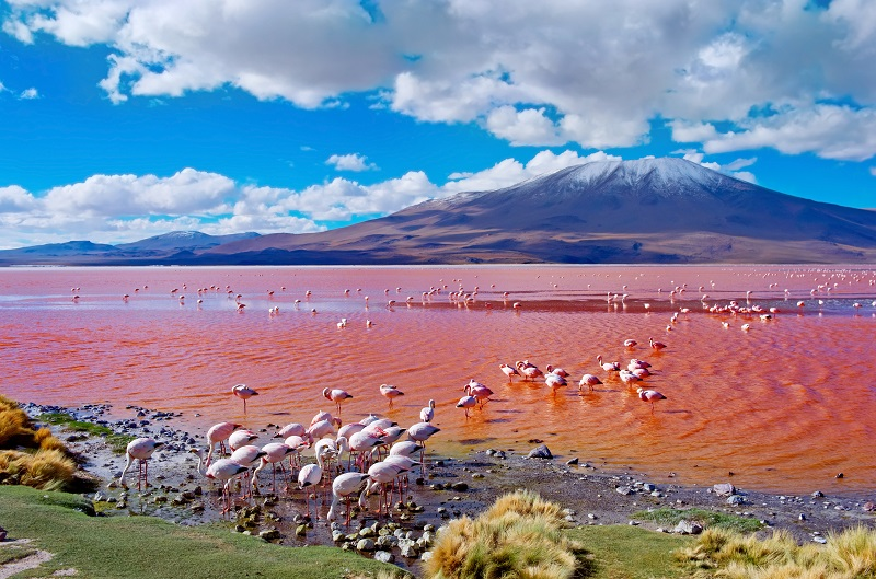 Bolivija, flamingi