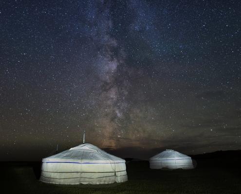 Beli geri v Mongoliji