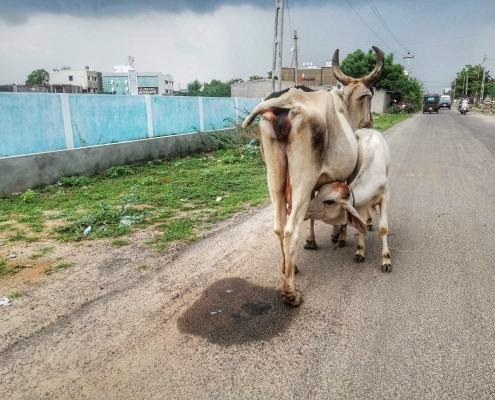 Indijsko podeželje