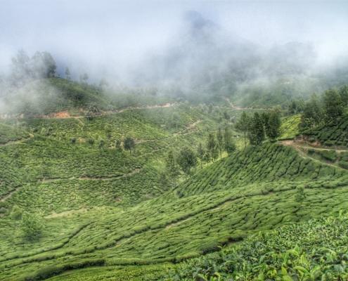 Čajne plantaže v Munnarju, Južna Indija