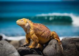 Ekvador in Galapagos potovanje