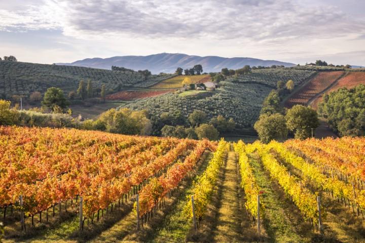 Vinogradi Montefalco