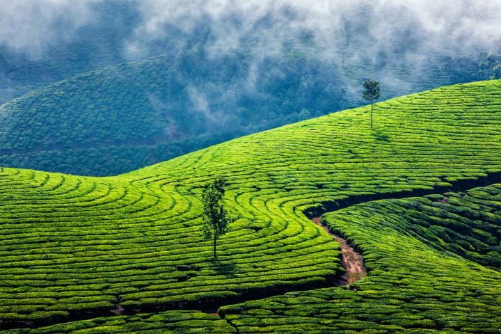 Munnar, Južna Indija
