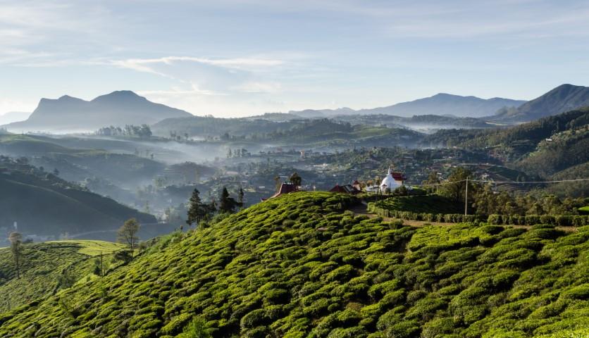Čajne plantaže na Šrilanki