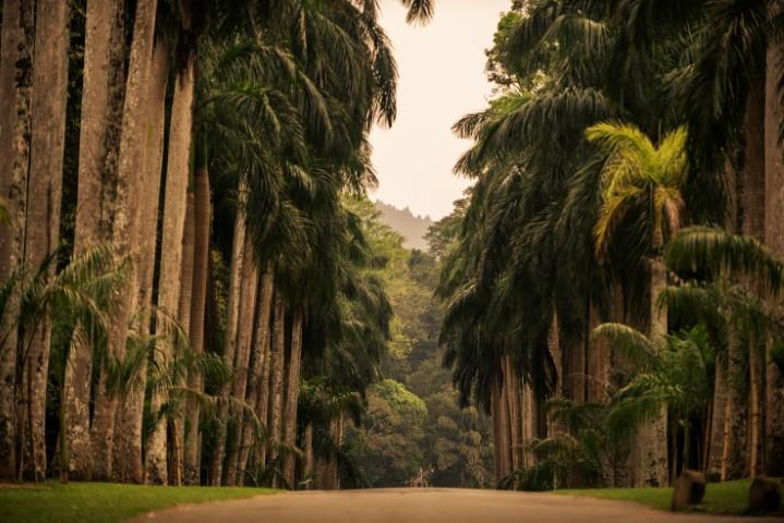 Paradeniya, Šrilanka